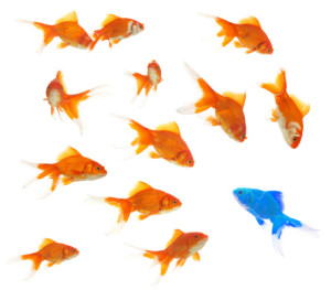 group of goldfishes with an alien inside